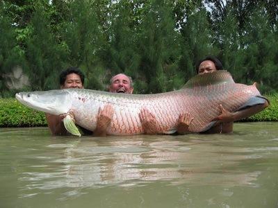 Hasil gambar untuk Ajari Seorang Pria Untuk Ikan\